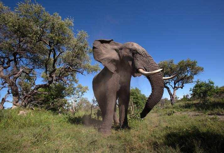 lodge-attitude-événementiel-voyage-incentive-tanzanie