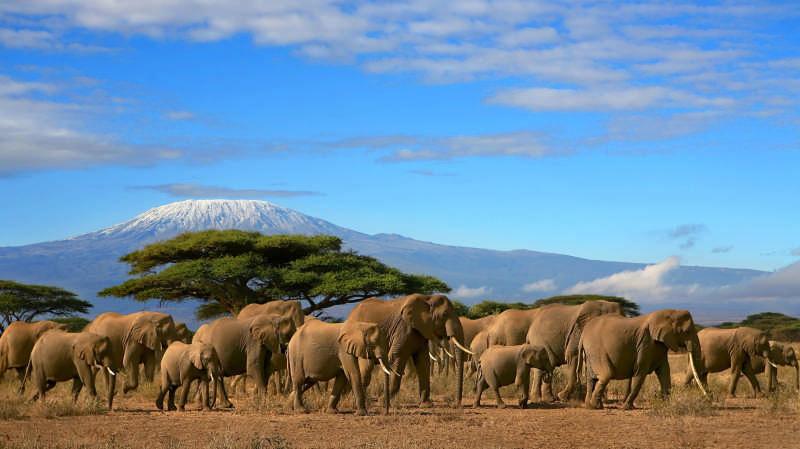 événementiel et voyage d'entreprise, tanzanie et zanzibar